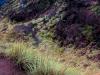 mount-batur-trekking-004