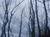 mount-batur-trekking-011