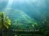 tegalalang-rice-terrace